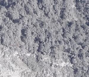 """写真 6. 低温""""火砕流""""の中流域の拡大.なぎ倒されたり,燃えた痕跡を示す樹木は見られない.枝も折れておらず,堆積量は少ないことが推定される."""
