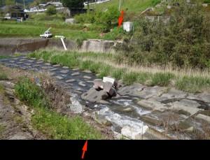 写真2 益城町堂園北、地震断層に沿って見られる木山川河床の護床工の座屈変形と剪断破壊。