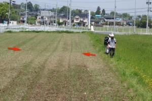 写真3 益城町飯田、布田川断層南端部に出現した右横ずれを示す地表地震断層。