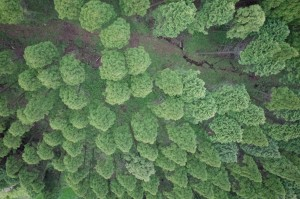 写真6 南阿蘇村立野の孤立丘を横断する開口亀裂。愛工大所有のUAVを使用して撮影した。